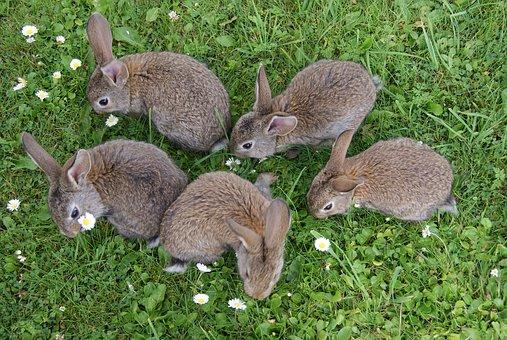 Harige konijnen