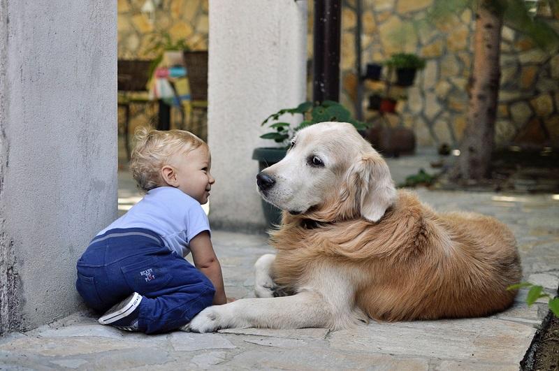 Een kind of een hond?